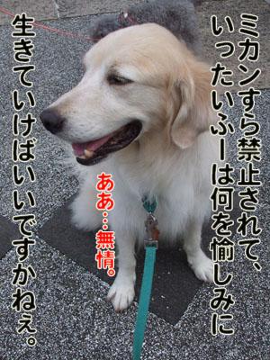 2010_08150018.jpg