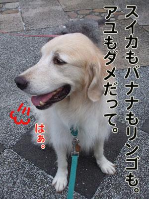 2010_08150019.jpg