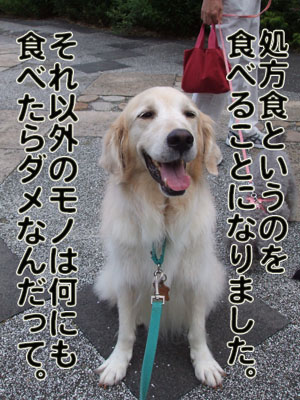 2010_08150021.jpg