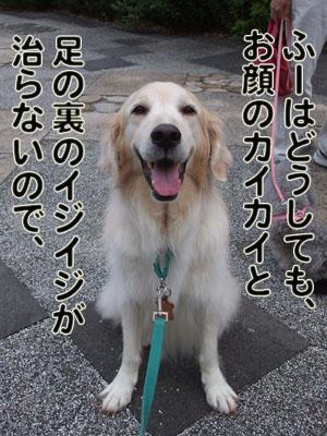 2010_08150022.jpg