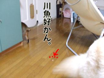 2010_08170016.jpg