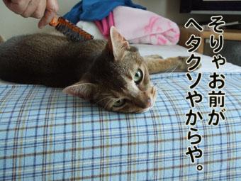 2010_08170046.jpg