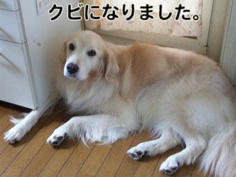 2010_08170052.jpg