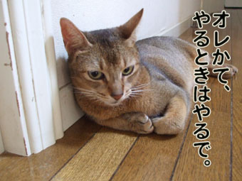 2010_08190015.jpg