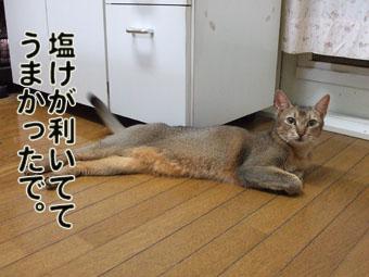 2010_08200017.jpg