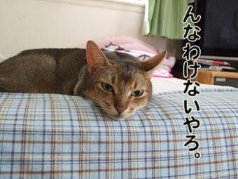 2010_08200030.jpg