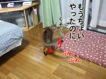 2010_09070017.jpg