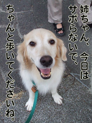 2010_09180002.jpg