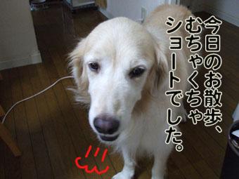 2010_09180008.jpg