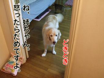 2010_10030013.jpg
