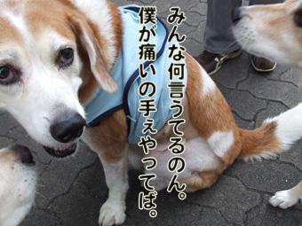 2010_10070044.jpg