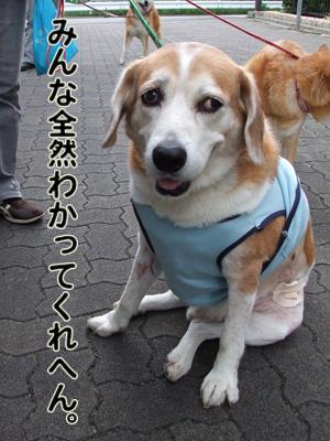 2010_10070049.jpg