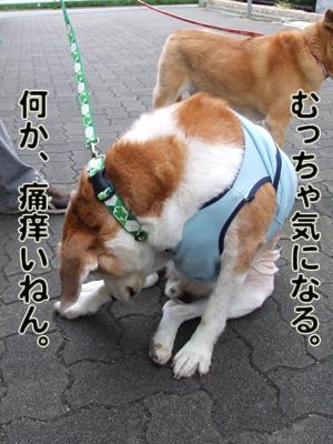 2010_10070055.jpg