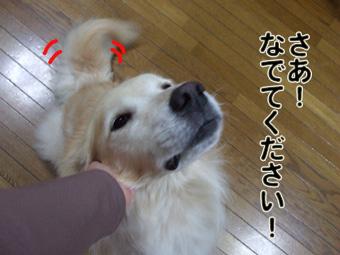 2010_10130022.jpg