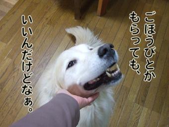 2010_10130031.jpg