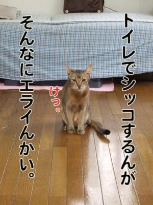 2010_10130032.jpg