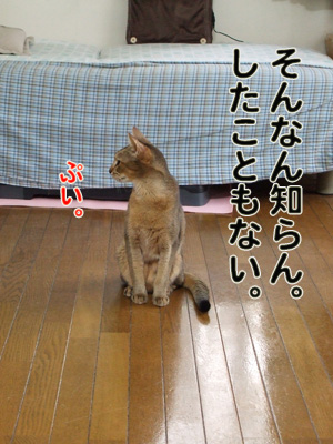 2010_10130038.jpg