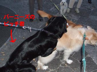 2010_10150008.jpg
