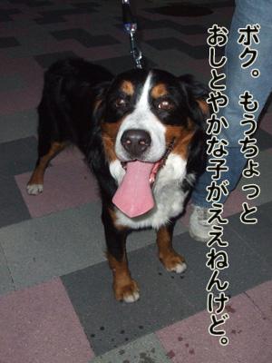 2010_10150026.jpg
