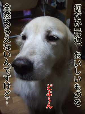 2010_10180020.jpg