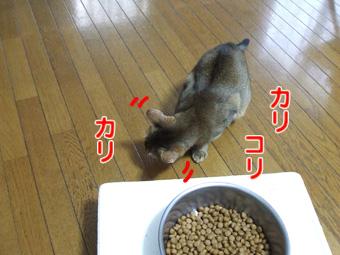2010_10220015.jpg