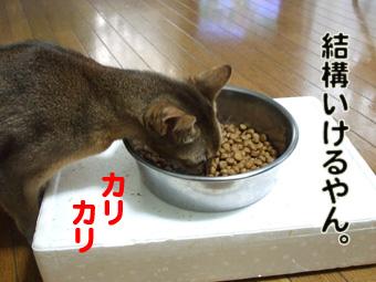 2010_10220020.jpg