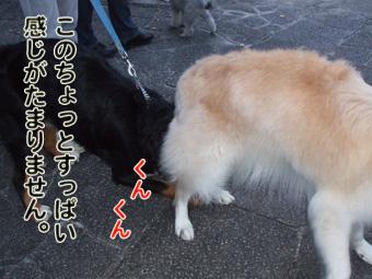 2010_10220072.jpg