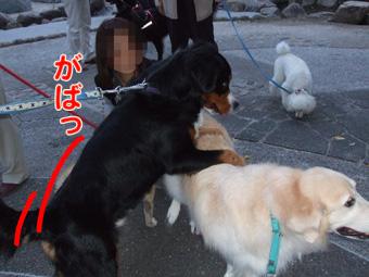 2010_10220074.jpg