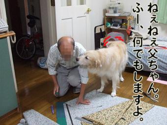 2010_11040005.jpg