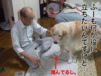 2010_11040015.jpg