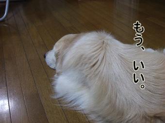 2010_11040081.jpg