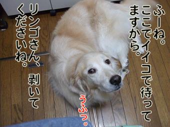 2010_11080013.jpg