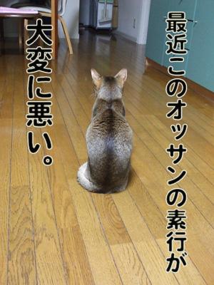 2010_11080030.jpg