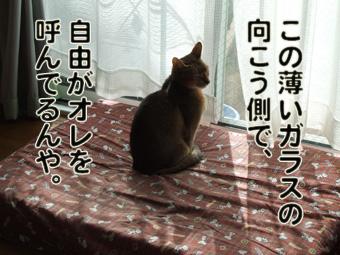 2010_11120004.jpg