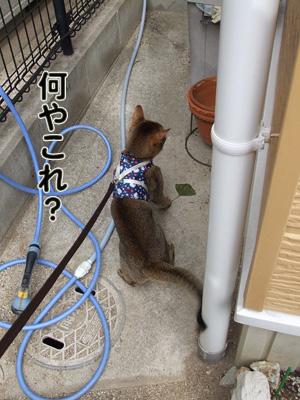 2010_11120014.jpg