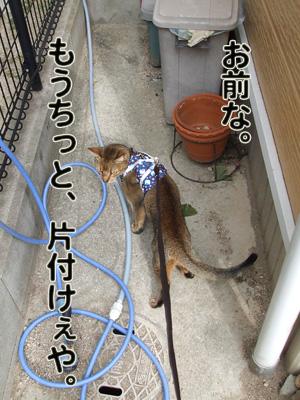 2010_11120015.jpg