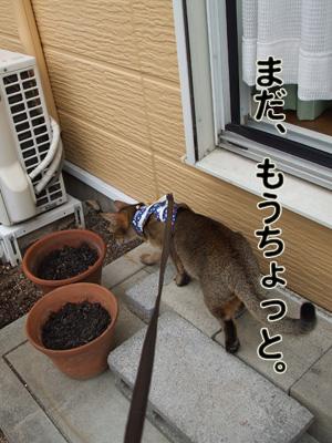 2010_11120037.jpg