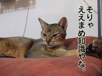 2010_11150012.jpg