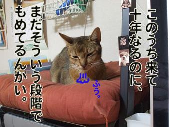 2010_11180001.jpg