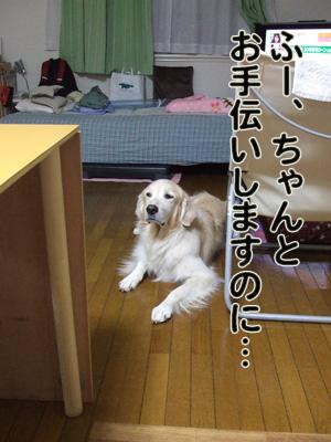 2010_11200003.jpg