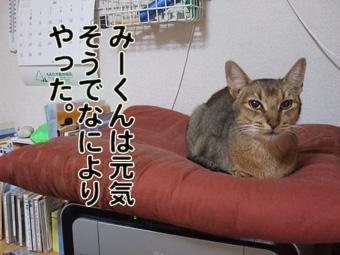 2010_11280002.jpg