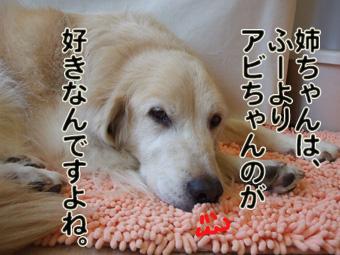 2010_11290016.jpg