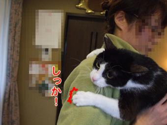 2010_11290049.jpg