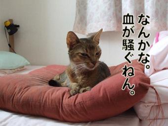 2010_12040013.jpg