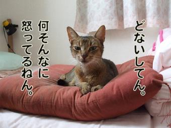 2010_12040014.jpg