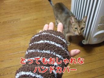 2010_12040029.jpg