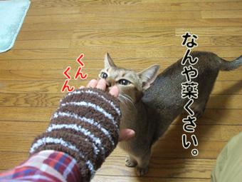 2010_12040030.jpg