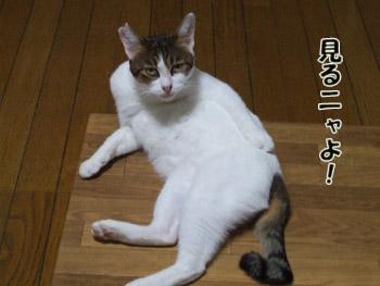 2011_09200018.jpg
