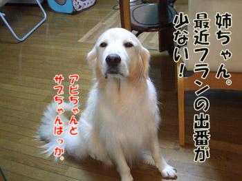 2011_10020010.jpg