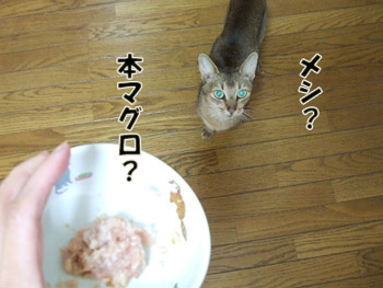 2011_10030003.jpg
